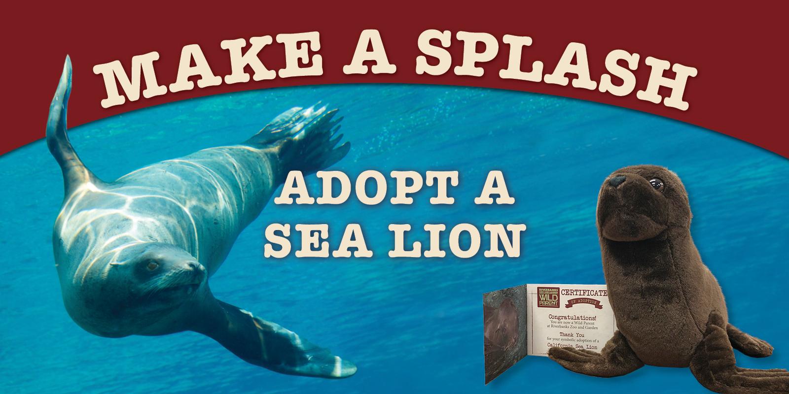 Help Us Feed the Sea Lions