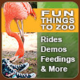 Fun Things to Zoo - Rides, Demos, Feedings & More