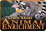 Learn about animal enrichment!