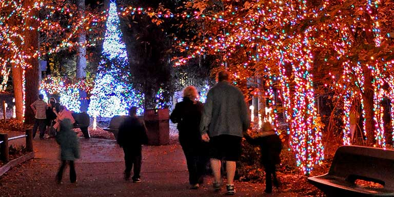 Nearly one million twinkling lights. - Lights Before Christmas :: Riverbanks Zoo & Garden